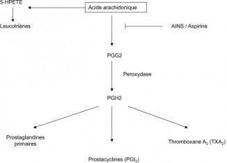 cascade métabolique de l'acide arachidonique